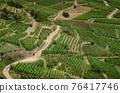 Vineyards of Keysersberg, winemaking village in Alsace (france) 76417746