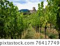 Vineyards and castle ruins of Keysersberg, winemaking village in Alsace (france) 76417749