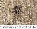 蜘蛛 跳蛛 家畜 76424162