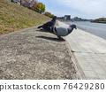 鴿子 鴿 一對 76429280