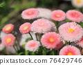 花朵 花 花卉 76429746