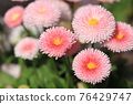 花朵 花 花卉 76429747