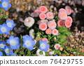 花朵 花 花卉 76429755