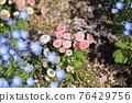 花朵 花 花卉 76429756