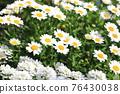 花朵 花 花卉 76430038
