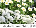 花朵 花 花卉 76430039