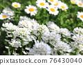花朵 花 花卉 76430040