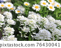 花朵 花 花卉 76430041