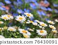 花朵 花 花卉 76430091