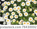 花朵 花 花卉 76430092