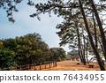 Maryang-ri Camellia Forest in Seocheon, Korea 76434955
