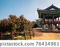 Maryang-ri Camellia Forest in Seocheon, Korea 76434961