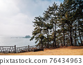 Maryang-ri Camellia Forest in Seocheon, Korea 76434963