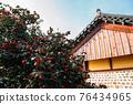 Maryang-ri Camellia Forest in Seocheon, Korea 76434965