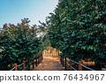 Maryang-ri Camellia Forest in Seocheon, Korea 76434967