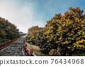 Maryang-ri Camellia Forest in Seocheon, Korea 76434968
