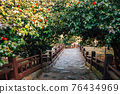 Maryang-ri Camellia Forest in Seocheon, Korea 76434969