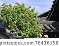 cotton rose, flowers, old imperial palace 76436158