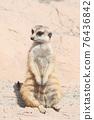 meerkat 76436842