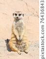 meerkat 76436843