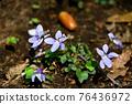 紫羅蘭 76436972