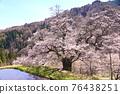 長野縣Komagi的櫻花 76438251