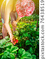 Woman farmer collects a harvest of ripe organic strawberries 76438519