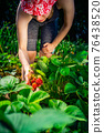 Woman farmer collects a harvest of ripe organic strawberries 76438520