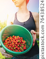 Woman farmer collects a harvest of ripe organic strawberries 76438524