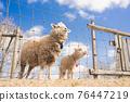 sheep, animal, animals 76447219