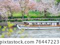 tenmabashi, cherry blossom, cherry tree 76447223