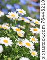 花朵 花 花卉 76448210