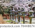 談山 신사의 벚꽃 76448674