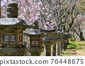 談山 신사의 벚꽃 76448675