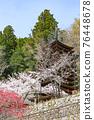 談山 신사의 벚꽃 76448678