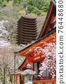 談山 신사의 벚꽃 76448680