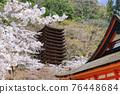 談山 신사의 벚꽃 76448684