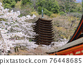 談山 신사의 벚꽃 76448685