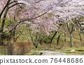 談山 신사의 벚꽃 76448686