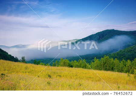 forest on the grassy meadow in the morning. beautiful countryside landscape in summertime. fog above the trees spreads from the distant mountains beneath a gorgeous sky with clouds 76452672