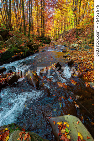 mountain river in the forest. water flow among the rocks. trees in autumn colors. sunny forenoon weather. beautiful nature background 76452676