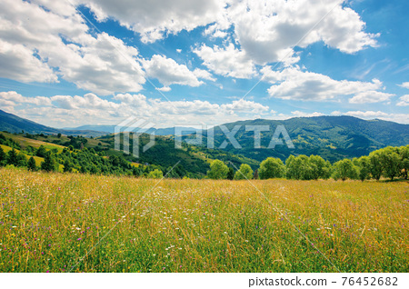 rural landscape with blooming grassy meadow. beautiful nature scenery of carpathian mountains on a sunny day. fluffy clouds on the blue sky 76452682