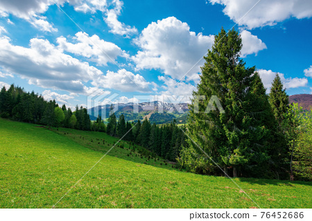 forest on the grassy hill. beautiful nature landscape in spring. snow capped mountains in the distance beneath a clouds on the blue sky. sunny weather 76452686