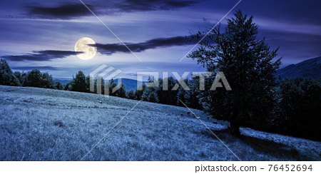 mountain landscape with pasture at night. beech trees on the hill in full moon light. beautiful countryside rural scenery in summer 76452694