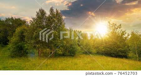 trees on the hill in summer scenery at sunset. beautiful mountain landscape on a cloudy day in evening light 76452703