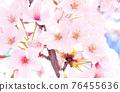 왕 벚나무 76455636