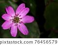 肝 花朵 花 76456579