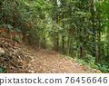 Dirt road through fall foliage trees Tropical rainforest Hiking path through a forest on a sunny day 76456646