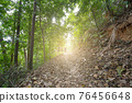 Young man walking alone in tropical rainforest green trees wild forest landscape 76456648