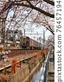 cherry blossom, cherry tree, sakura 76457194
